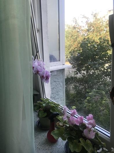 Квартира Калининград, Интернациональная улица, дом 9